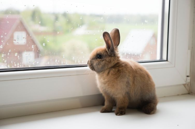 C:\Users\yitzw_000\Downloads\Pet Insurance for Rabbits.jpg