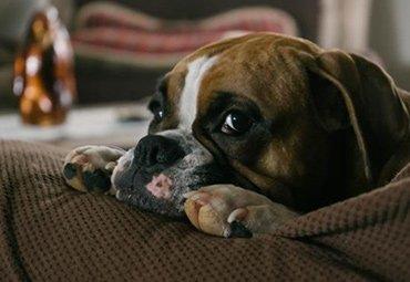 SafehoundsBlog_06