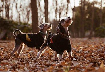 SafehoundsBlog_08